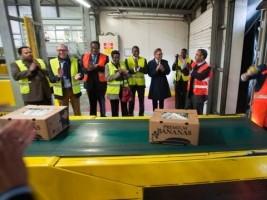 Haïti - Économie : Les premières bananes haïtiennes sont arrivées en Europe