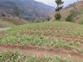 Haiti - Agriculture : US$500,000 project in Nan Panyol