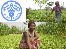 Haiti - Agriculture : FAO supports Haitian women in the agricultural sector