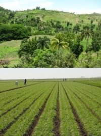 Haiti - Environment : UN urges Haiti to good environmental and agricultural practices