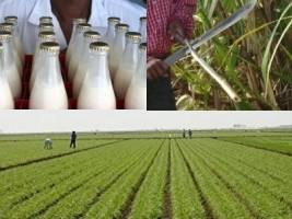 Haiti - Agriculture : Closing of the ambitious project «PWOFIPA'N»