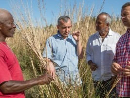 Haiti - Agriculture : New partnership in the sector of Vetiver