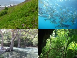 iciHaiti - Environment : Trust Fund for Biodiversity Conservation