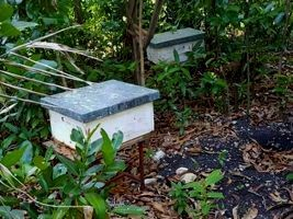 Haiti - Agriculture : Beekeeping an alternative activity for fishermen in St-Jean du Sud