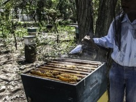 Haiti - Environment : Development of the beekeeping industry in the South