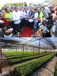 iciHaiti - Environment : Inauguration of the Plant Propagation Center (South)