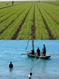 Haiti - Canada : Economic recovery for 4,500 farm families and fishermen in the Northwest