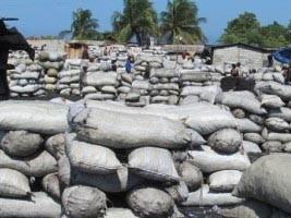 iciHaïti - FLASH RD : Des haïtiens brûlent la forêt dominicaine, 18,000 sacs de charbon de bois saisi