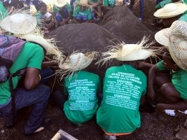 iciHaiti - Cavaillon : Towards a green commune !