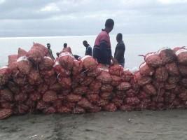 iciHaiti - DR : Discovery of 2.5 tons of smuggled garlic from Haiti