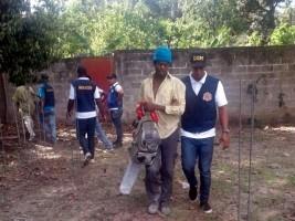 iciHaïti - RD : 163 haïtiens déportés lors de contrôle migratoire