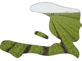 iciHaïti - Agriculture : Bonne nouvelle, des conditions pluviométriques favorables