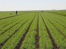 iciHaïti - Agriculture : Détérioration de la sécurité alimentaire à l'échelle nationale