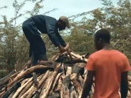iciHaïti - Invitation : Grande Première du film documentaire «Chabon»