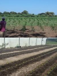 iciHaïti - Humanitaire : «Food For the Poor» travaille pour un avenir meilleur des communautés haïtiennes