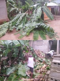 Haiti - Grand'Anse: Violent winds, a hundred houses destroyed (
