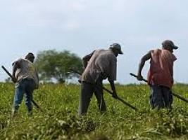 Haïti - Covid-19 : Le secteur agricole a besoin de mesures particulières