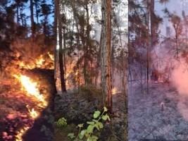 Haïti - Environnement : Près de 30 hectares de la Forêt de Pins détruits par des incendies volontaires