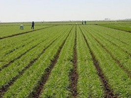 iciHaïti - Agriculture : Soutien de la FAO à  la campagne agricole de printemps