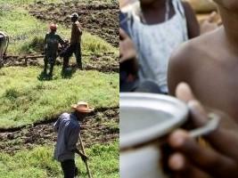 iciHaïti - Covid-19 : Détérioration attendue de la situation de la sécurité alimentaire