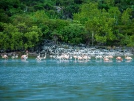 iciHaiti - Environment : Support of the European Union in Grande-Anse