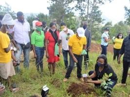 iciHaïti - Agriculture : Relance de la filière café dans la commune de Kenscoff