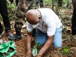 Haïti - Agriculture : 15 millions d'euros pour la relance de la filière café