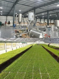 iciHaiti - Savane Diane : The Stevia Agro Industrie project could generate more than 20,000 direct jobs