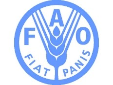 Haiti – Agriculture : FAO distributes seeds… of the discord…
