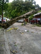 Haiti - Environment : Strong winds and rain, extensive damage