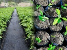 Haiti - Environment : Ambitious plan for reforestation and land management