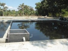 Haiti - Agriculture : The beekeeping and aquaculture receive government assistance
