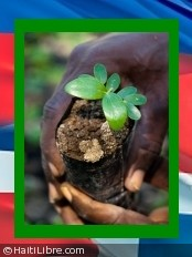 Haiti - Environment : Launch of the reforestation campaign of the island