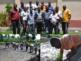 Haiti - Agriculture : System of Rice Intensification in the North