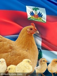 Haiti - Economy : Towards a lifting of the ban on Dominican poultry products...?