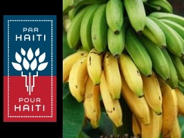 Haiti - Agriculture : Launching of an intensive program of banana production