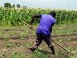 Haiti - Agriculture : The exodus of the young of rural