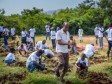 iciHaiti - Environment : 12,500 fruit and forest seedlings were planted...