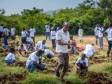 iciHaïti - Environnement : 12,500 plantules fruitières et forestières ont été plantées...