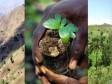 iciHaïti - Environnement : Lancement du Challenge du reboisement aux Gonaïves