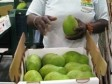 Haiti - Economy : Two new post-harvest centers for mangos