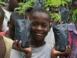 iciHaiti - Environment : For the returning to the «Tree Season» in Haiti