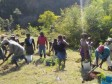 iciHaiti - Environment : Reforestation operation in the South