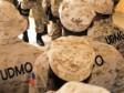 Haïti - Sécurité : 2 agents de l'UDMO tombent sous les balles