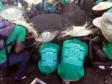 iciHaïti - Cavaillon : Vers une commune verte !