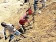 iciHaïti - USA : Pires formes de travail des enfants, progrès minimes en Haïti