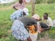 iciHaïti - Agriculture : Satisfaction de producteurs maraichers du Département du Centre