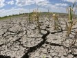 Haiti - Agriculture : Record rain deficit for more than 40 years, alarming situation in the South