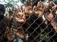 iciHaiti - Social : Haitian children trafficking at the border area
