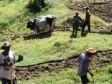 Haiti - Agriculture : USAID alongside farmers to increase agricultural productivity